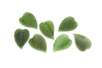 Nephrite/Canadian Jade (Natural) Carved Leaf Gemstone Cabochon